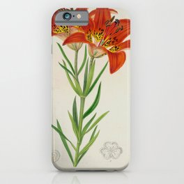 Lilium philadelphicum Vintage Botanical Floral Flower Plant Scientific iPhone Case