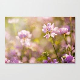 Wild pink Clover or Trifolium flowers Canvas Print