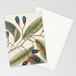 Tupelo Tree (Arbor in aqua nafeens)  Red Bay (Laurus Carolinenfis) Purple-berried Bay (Liguftrum Lau Stationery Cards