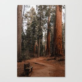 A Very Nice Place to Sit Canvas Print