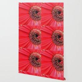 Gerbera 1 Wallpaper