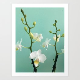 Small Orchids  Art Print