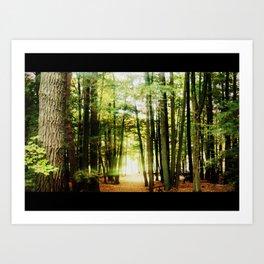 Mystic Forest Path Art Print