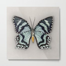 Teal green blue Zodiac Moth Metal Print