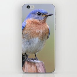 Bluebird iPhone Skin
