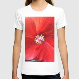 Fruit Punch Hibiscus, red flower close up, in my hipster garden T-shirt