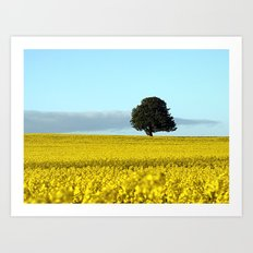 Fife's Golden Fields Of Rapeseed. Art Print
