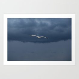 Seabird flying in the blue clouds - Minimalist wildlife and nature photography Art Print