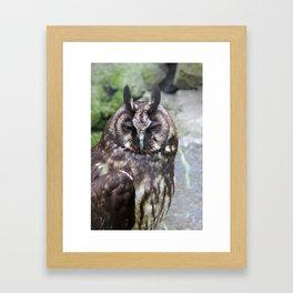 Stygian Owl Framed Art Print