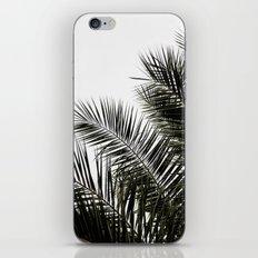Palm Leaves 3 iPhone & iPod Skin