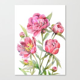 Peonies Watercolor Florals Botanical Design Canvas Print