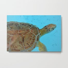 Florida Turtle Metal Print