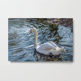 White swan with black feet Metal Print