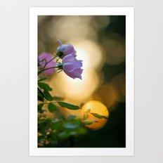 Roses at Sunset Art Print