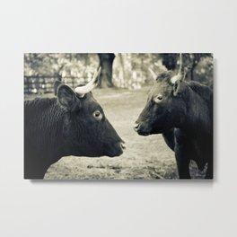 Cow Friends Metal Print