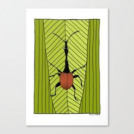 giraffe weevil Canvas Print