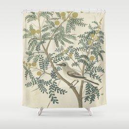 Robert Jacob Gordon - Acacia karroo Hayne or Vachellia karroo - 1777-1786 Shower Curtain
