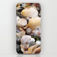 shells iPhone & iPod Skins featuring Shells by BACK to THE ROOTS