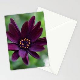 Purple Osteospermum Flower (Marco Close-Up) Stationery Cards