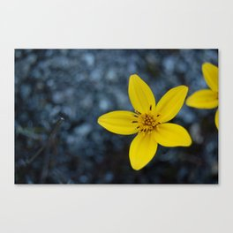 Wild Flowers on Cerro Chirripó, Costa Rica Canvas Print