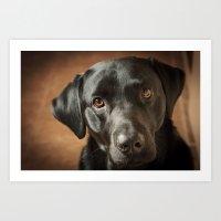 labrador Art Prints featuring Black Labrador   by Simon's Photography