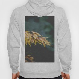 Faded Yellow Acer Leaves Hoody