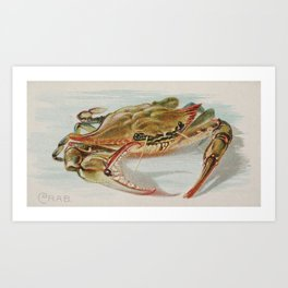 Vintage Illustration of a Crab (1889) Art Print