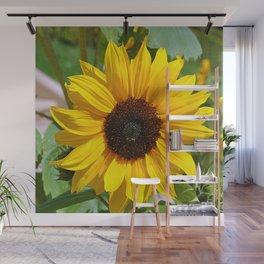 Sunflower nature photo Wall Mural