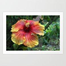 Joy in the Garden Art Print