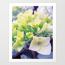 remembering spring Art Print