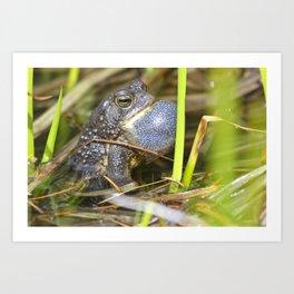 Toad with bulging throat Art Print