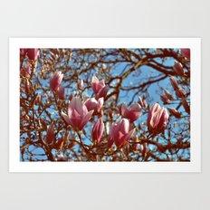 Magnolia Heaven Art Print