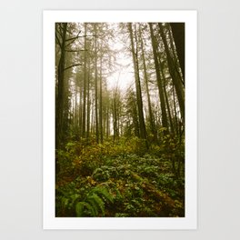 Golden // Forest Art Print