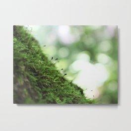 Moss 4 Metal Print