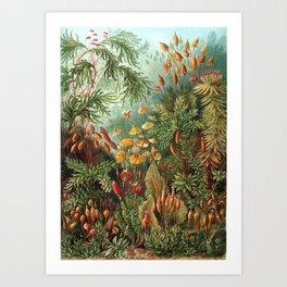 Vintage Plants Decorative Nature Art Print
