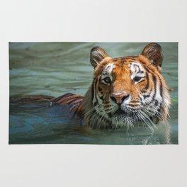 Cincinnati the Tiger in the Pool Rug
