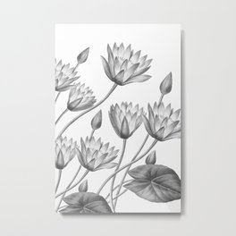 Water Lily Black And White Metal Print