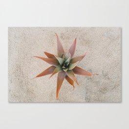 Mexico Succulent Canvas Print
