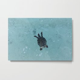 Polynesian sea turtle Metal Print