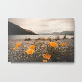 California Poppies in the Mountains - Lake Tekapo, New Zealand Metal Print