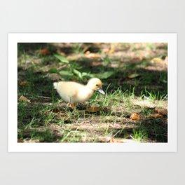 Baby Duckling strolling on a lawn Art Print