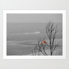 Red Cardinal Birds Black and White Beach Coastal A195 Art Print