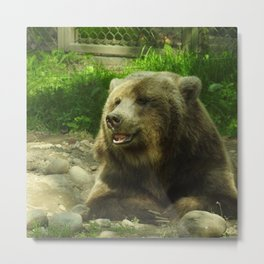 Grizzy Bear Metal Print