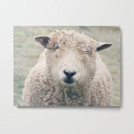 Smiley Sheep Metal Print