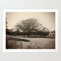 Cape Cod Tree Art Print
