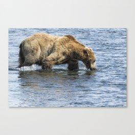 Brown Bear Going for a Dip Canvas Print
