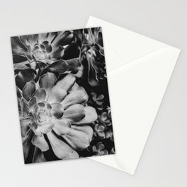 Aeonium in Monochrome  |  Succulents Stationery Cards