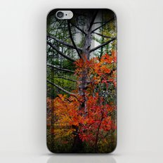 Fall Spectacle iPhone & iPod Skin