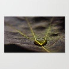 leaf water drop Canvas Print