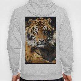 Tiger, Tiger - Big Cat Art Design Hoody